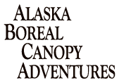 Alaska Boreal Canopy Adventures