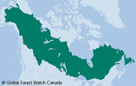 North America's Boreal Forest